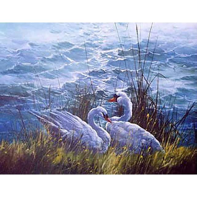 1302 Evening Swans